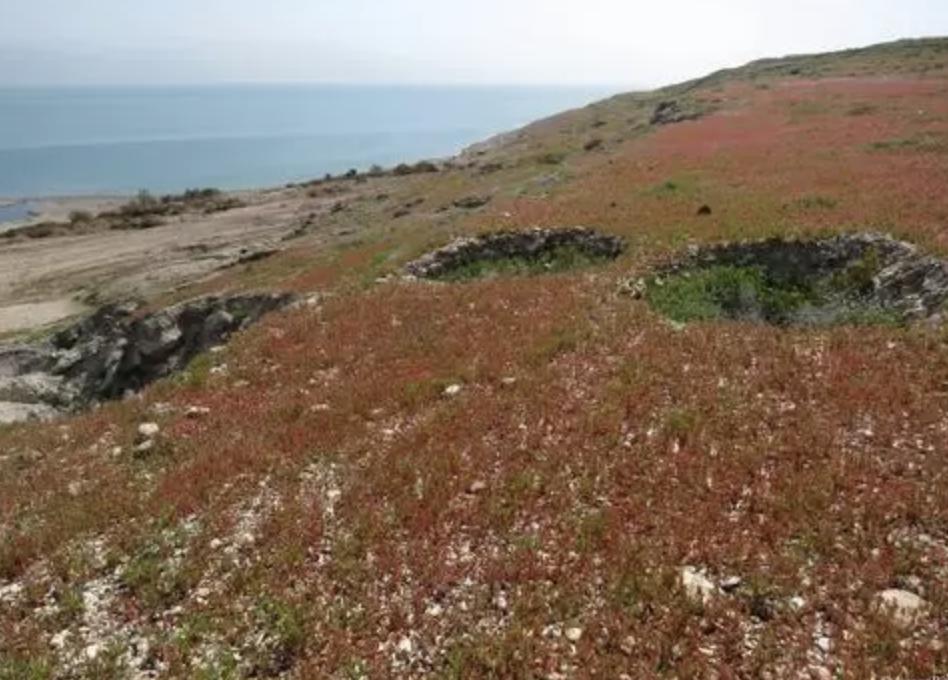 Uma profecia do livro de Ezequiel está sendo cumprida em Israel quando eles vêem o nascimento de flores na costa do Mar Morto.
