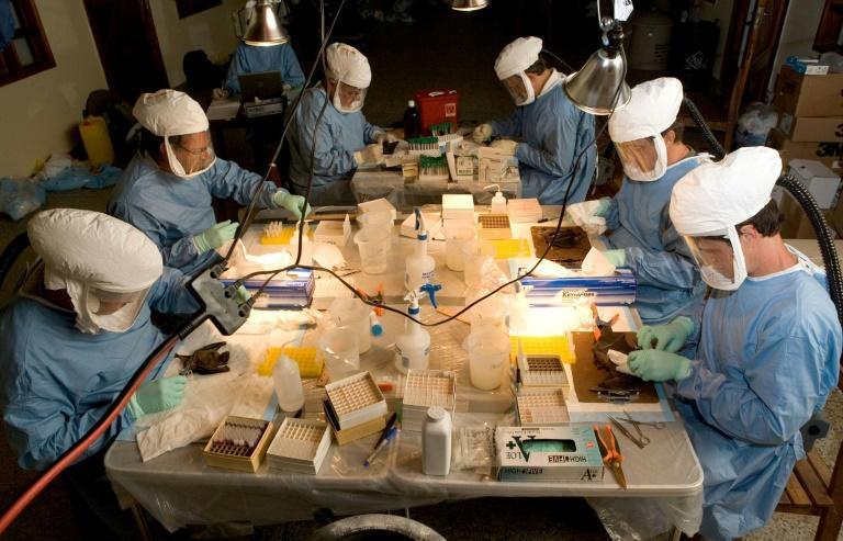 A Guiné registrou o primeiro caso da doença provocada pelo vírus de Marburgo